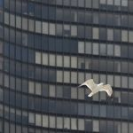 Soaring Seagull by Joe Bonita, f16 Color Digital, Score: 9