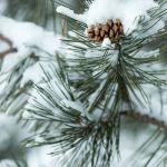 Snow Cone by Brian Donovan, f11 Digital, Score: 9
