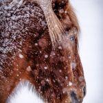 Snowy and Sad by Fred Larke, f11 Digital, Score: 9