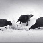 Winter Feast by John Grevillius, f11 Digital, Score: 10