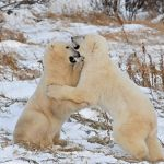 Bear Hug by Mary Paetow, f16 Digital, Score: 10
