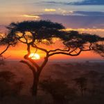 Sunrise Over the Serengeti by Cohan Zarnoch, f11 Digital, Score: 9