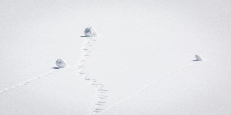 Snowman Wantabes by Brian Donovan, f16 Digital, Score: 9