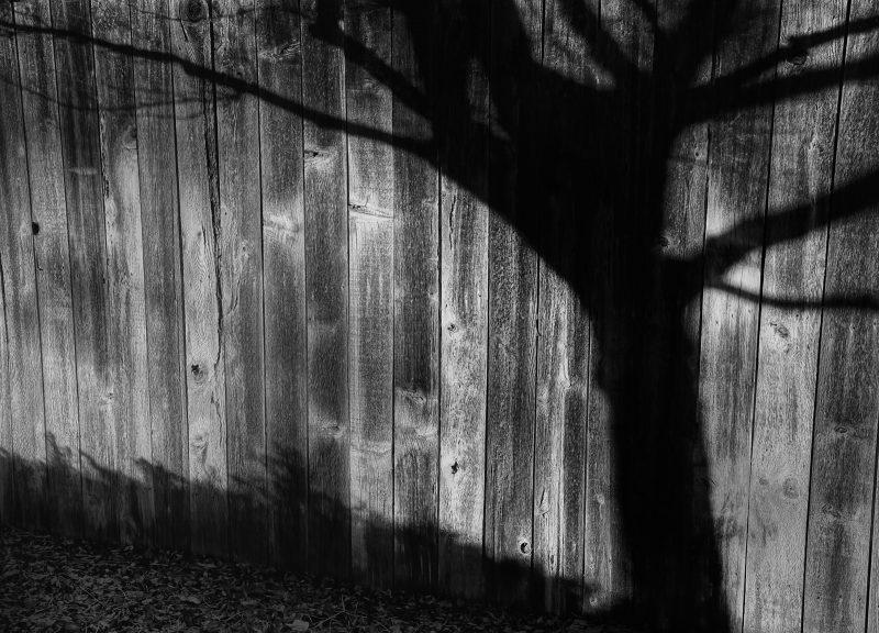 Shades of Winter by Susan Haffke, f11 B&W Digital, Score: 9