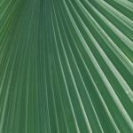 Pleated Shadows by Nancy Myer, f16 Color Digital, Score: 9