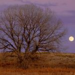 Moonrise with Cottonwood by Dave Hull, f5.6 Digital, Score: 9