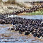 Crossing the Mara River by Butch Mazzuca, f16 Digital, Score: 10