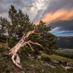 Bristlecone Pine by Clint Dunham, f11 Digital, Score: 10
