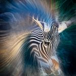 Zebra Abstract Portrait by Leander Urmy, f16 Digital, Score: 9