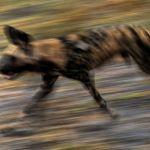 On The Hunt by Oz Pfenninger, f16 Digital, Score: 10