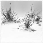 In the Dead of Winter by Shawn Slade, f11 Digital, Score: 9