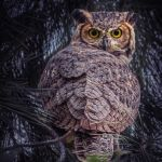 Whoo Are You? by Terry Hanford, f5.6 Digital, Score: 9
