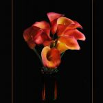 Calla Lilies by Peggy Dietz, F16 Color, Score - 9