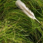 Fallen Feather by Kristen Mary Smith, f11 Digital, Score: 9