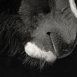Winter Whiskers by Mary Paetow, f16 Monochrome, Score: 10