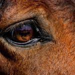 Eye of the Horse by Leander Urmy, f16 Digital, Score: 10