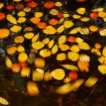 Aspen Leaf Whirlpool by Bill Rothenmeyer, f11 Color Digital, Score: 9