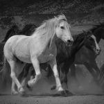 On The Run by Ronald Schaller, f16 B&W Digital, Score: 9