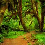 Temperate Rain Forest by Oz Pfenninger, f16 Digital, Score: 10