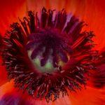 On Fire by Laura Moran, f5.6 Digital, Score: 9