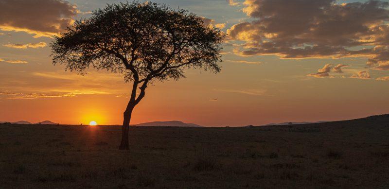 Masai Mara Sunrise by Ally Green, f11 Digital, Score: 10