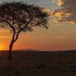 Masai Mara Sunrise by Ally Green, f11 Digital, Score: 10