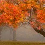 Foggy Morning Color Burst by Sam Alexander, f11 Digital, Score: 10
