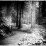 Path at Twilight by Karen Kirkpatrick, 1st f11 Monochrome