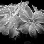 Rain Drops by Julia Spring, HM f8 Digital