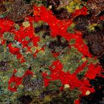 Laughing Lichen by Oz Pfenninger, f11 Digital, Score - 9