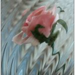 Swirling Rose by Peggy Dietz, f16 Color, Score: 9