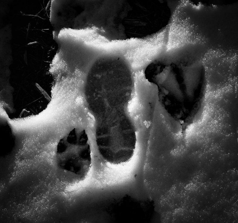 Witness Marks by Dominic Adducci, f5.6 B&W Digital, Score: 10
