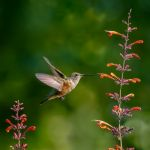 Backyard Hummingbird by Dan Greenberg, f16 Color Digital, Score: 9