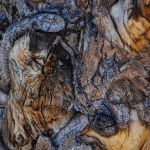 Backyard Bark by Victoria Ashby, f11 Color Digital, Score: 9