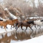 Winter Crossing by Gigi Embrechts, f11 Digital, Score - 10