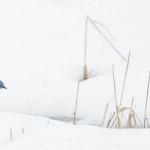 Blue on White by Gwen Peña, f5.6 Digital, Score - 9