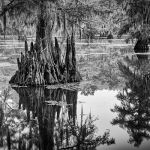Bayou by Danny Lam, f11 Monochrome, Score: 9
