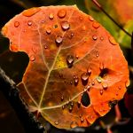 Autumn Rain by Leander Urmy, f16 Digital, Score: 9