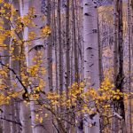 Aspen Over Kebler Pass by Gwen Paton, f11 Digital, Score: 9