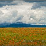 Rare Summer Bloom--South Park by Nancy Myer, f16 Digital, Score: 9