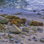 Sunrise On the Beach by Victoria Ashby, f8 Digital, Score: 9