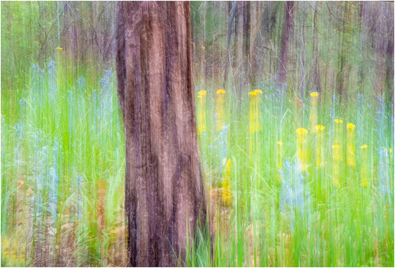 Spring Flowers by Dave Hull, f16 Color Digital, Score: 9