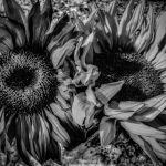 Lovely Pair by Victoria Ashby, f11 B&W Digital, Score: 9