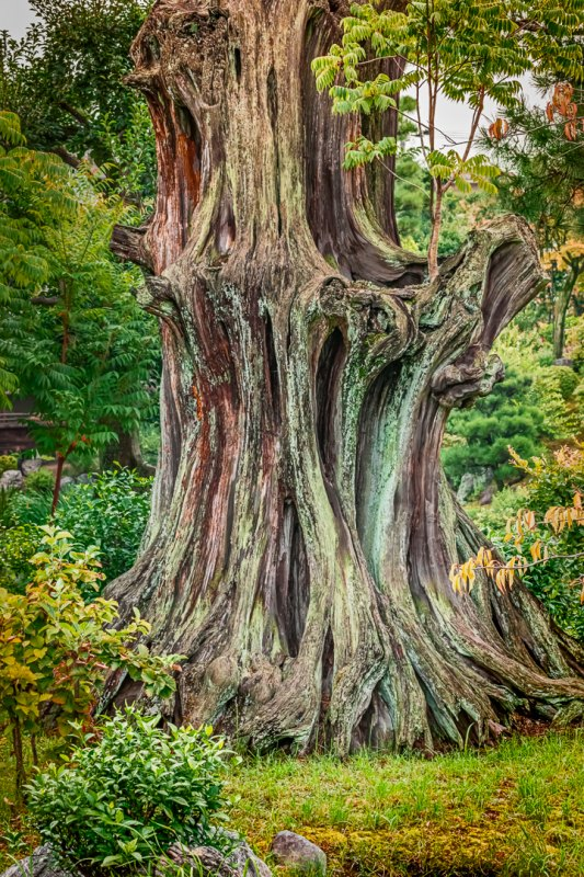 Gnarly by Terry Hanford, f5.6 Color Digital, Score: 10
