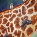 Africa by Butch Mazzuca, 1st f8 Digital