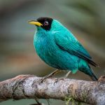 Green Honeycreeper by Dan Greenberg, 2nd f16 Digital