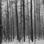 Snow Streaks by Elmer Paetow, f5.6 Monochrome, Score - 10