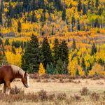 Classic Colorado by Brian Donovan, f11 Digital, Score: 9
