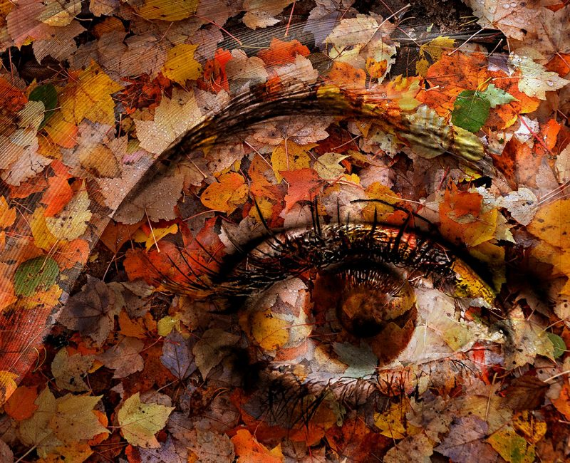Eye of Autumn by Joe Bonita, f16 Digital, Score: 10