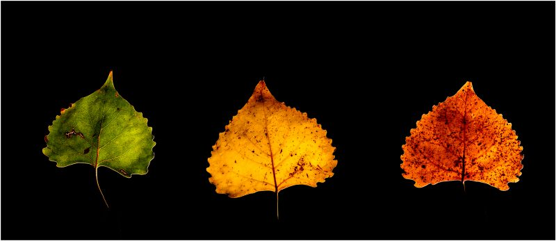 Three shades of Autumn by Clifford Stockdill, f5.6 Digital, Score: 9